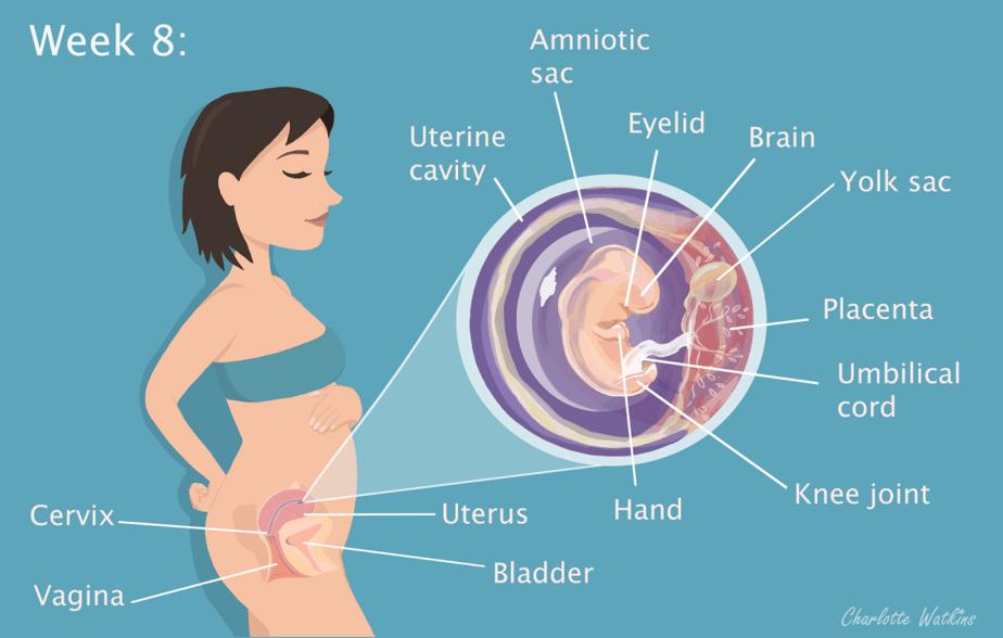 Week 8 - My Pregnancy Journey - Image by Charlotte Watkins - Charlottewatkins.co.uk