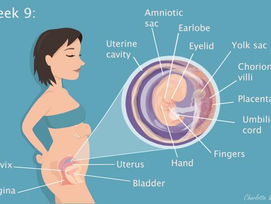 Week 9 - My Pregnancy Journey - Image by Charlotte Watkins