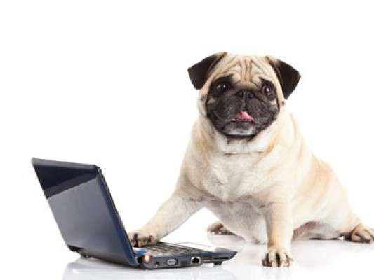 Buying pet products online