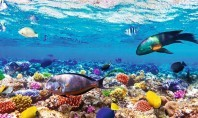 Sharm el-Sheikh – A top class Thomson holiday for family goers