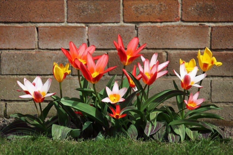 Plant some flowers - motherhooddiaries
