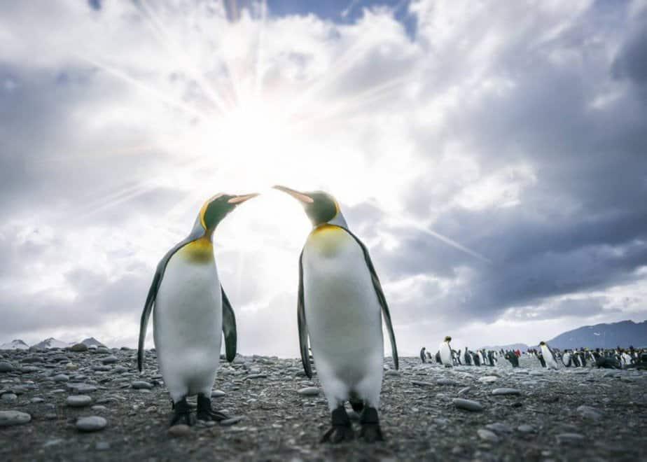 King Penguins in the Antarctica sun - motherhooddiaries