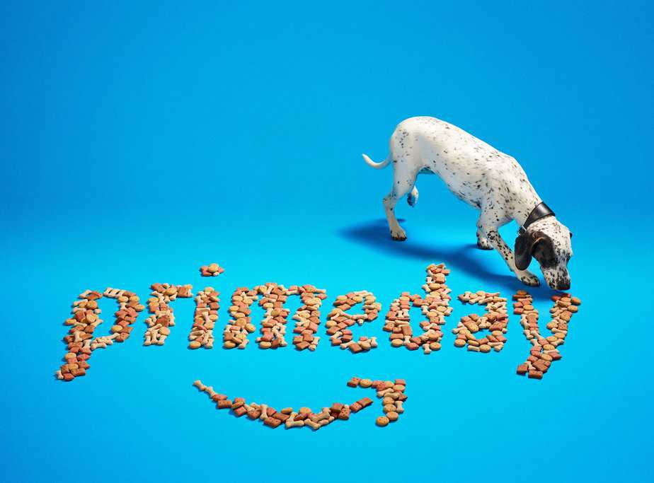 Amazon Prime Day for furry friends - motherhooddiaries
