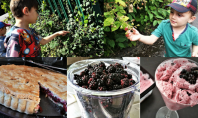 How to make the most of blackberry season - motherhooddiaries