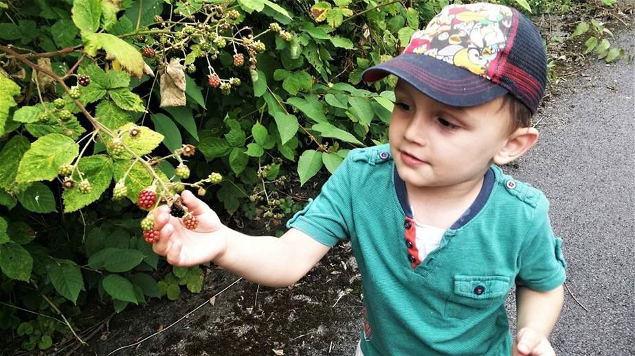 How to make the most of blackberry season - motherhooddiaries