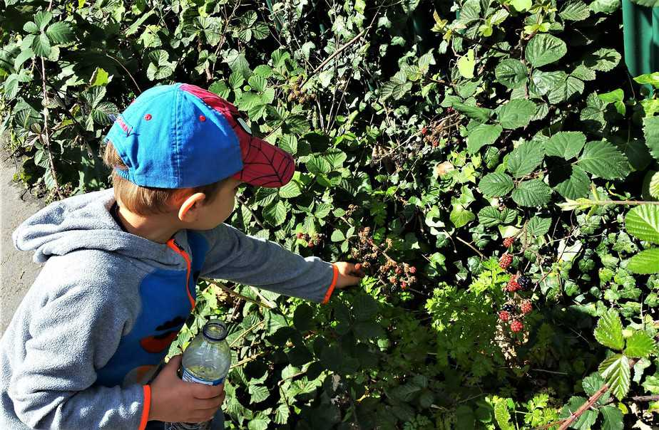 Blackberry picking with Aidan - motherhooddiaries
