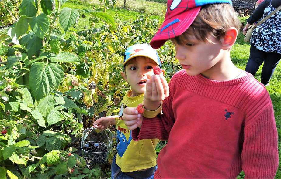 Aidan surprised at his raspberry picking skills - motherhooddiaries