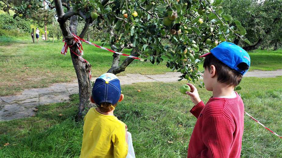 Aron examining the apples - motherhooddiaries