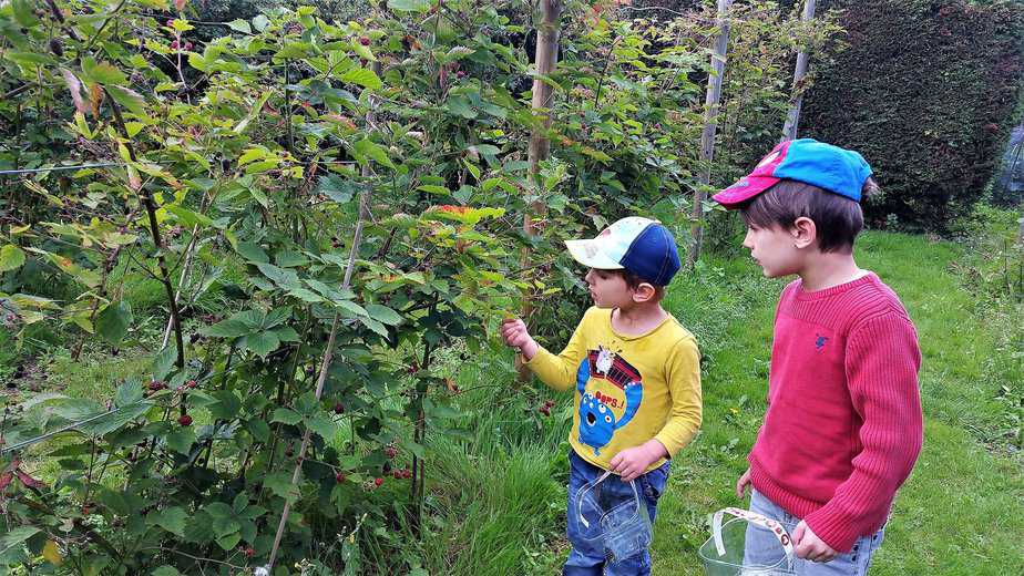 Aidan picking blackberries while Aron is watching - motherhooddiarie
