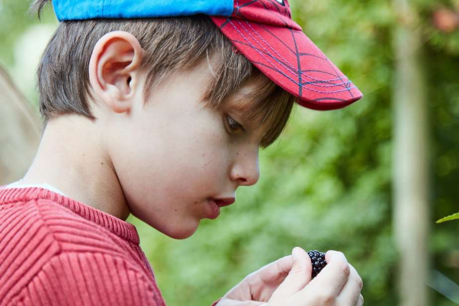 Aron examining a blackberry - motherhooddiaries