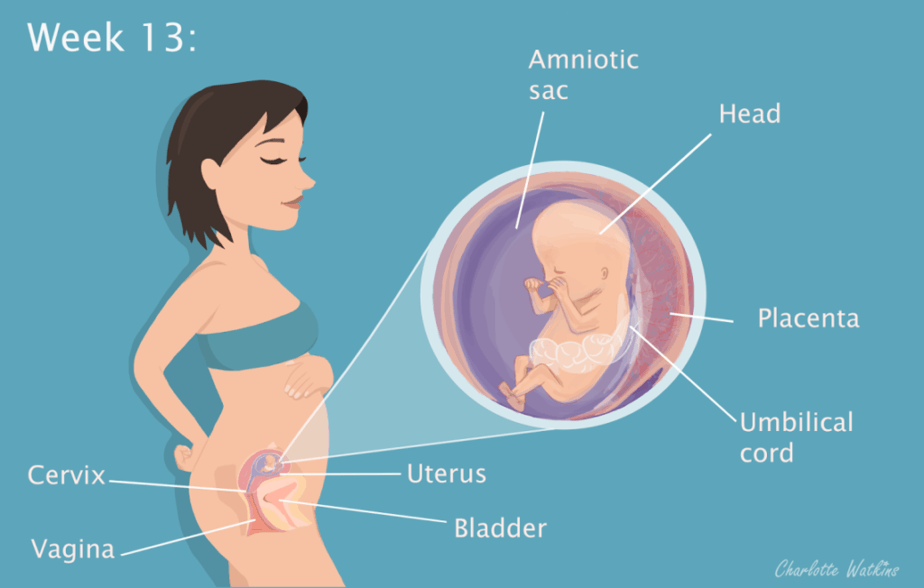 13 weeks pregnant - the science part