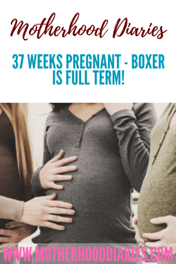 37 weeks pregnant - Boxer is full term!