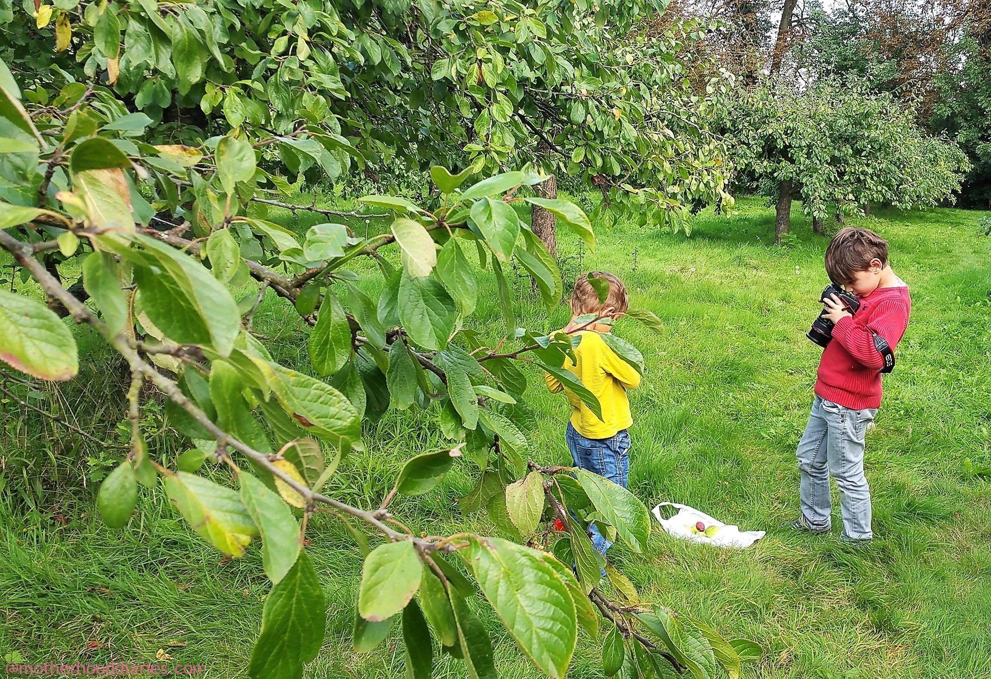 Family Fruit Picking on the Farm with Fruit Shoot -#ItsMyThing