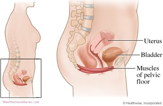 Strengthening your pelvic floor muscles after pregnancy with Neen Aquaflex